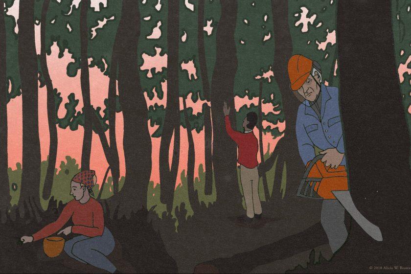 Collaborative Forest Management